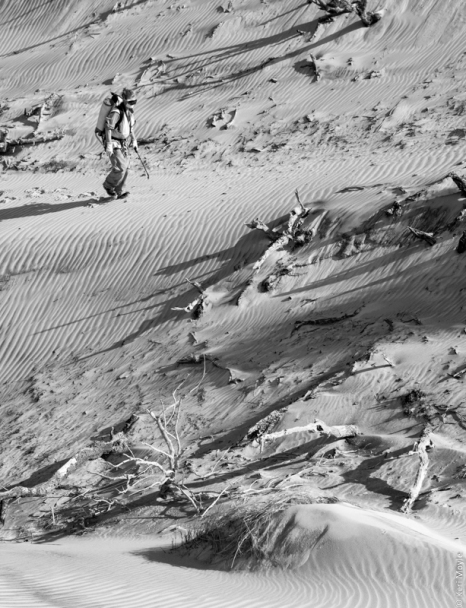 Marram grass (Ammophila arenaria) spraying, Big Sand Pass, Mason Bay