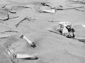 Deer skull, northern dune field, Mason Bay